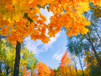 Shutterstock 1802809684