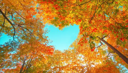Shutterstock 1816260440 2